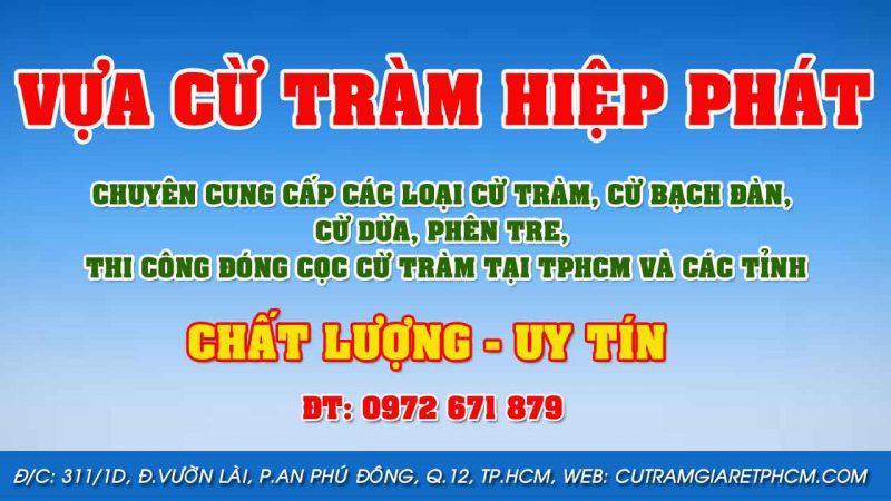 Chuyên bán cừ bạch đàn, bán cừ tràm tại TPHCM giá rẻ - cừ tràm Hiệp Phát