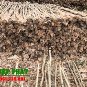 Báo giá bán cừ tràm Đồng Nai