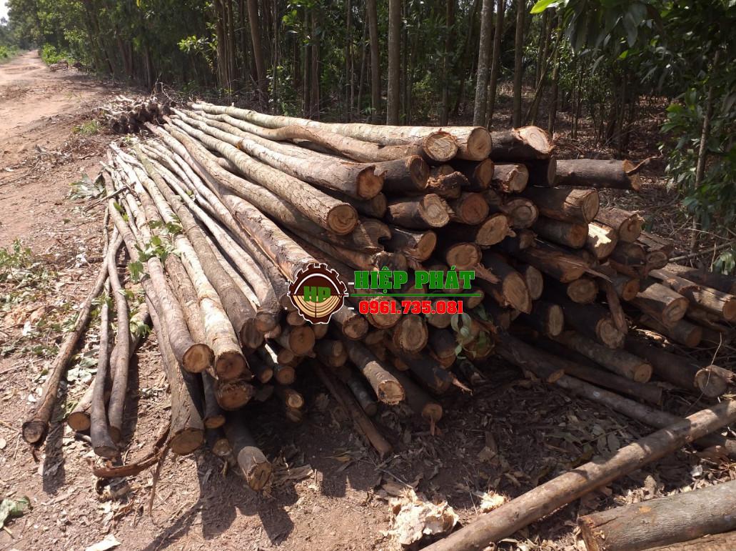 Các loại cây chống gỗ bạch đàn, cừ bạch đàn của Hiệp Phát luôn có sẵn và đảm bảo chất lượng