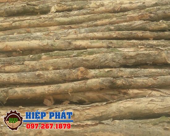 Cừ tràm dài 4,2m đến 4,3m, bán cọc Cừ Tràm giá rẻ tại TPHCM