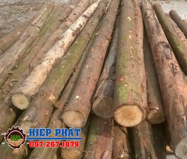 Báo giá cừ bạch đàn D14 dài 7,5m, bán gỗ Bạch đàn giá rẻ
