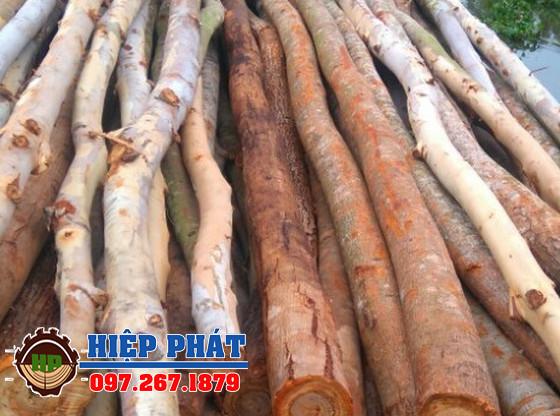 Mua bán cây chống bạch đàn tại TPHCM, Cừ bạch đàn D12 dài 7m